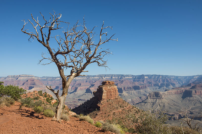 cedar-ridge-grand-canyon