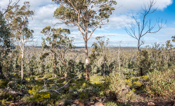 julimar-forest-perth-day-4wd